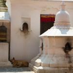 Bouddhanath: un cane randagio riposa all'entrata del tempio