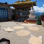 Namobuddha: lavorazione delle pannocchie